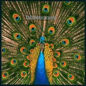 Bluetones_1996_Album
